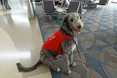 Pets Unstressing Passengers (PUP) at LAX