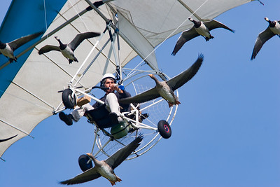 Christian Moullec, Geese, Microlight, Pilot, Shoreham, Shoreham 2005, aircraft, airshow