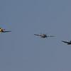 1945 - Goodyear Corsair FG-1D / 1944 - Grumman FM-2 Wildcat / 1948 - Grumman F8F 2P Bearcat
