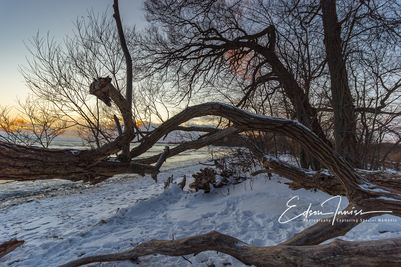 A winter walk 3
