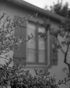 Palace Court Window & Tree