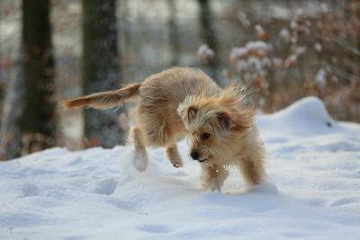 Wäller im Schnee