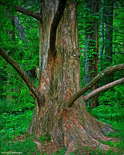 forest scene from the Arboretum at Auburn University, Auburn, AL