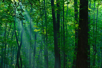 morning sunlight through the trees at Ebenezer Swamp near Montevallo, AL