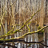 reflection in the lake that's part of the swamp at Perry Lakes Park, Perry County, AL