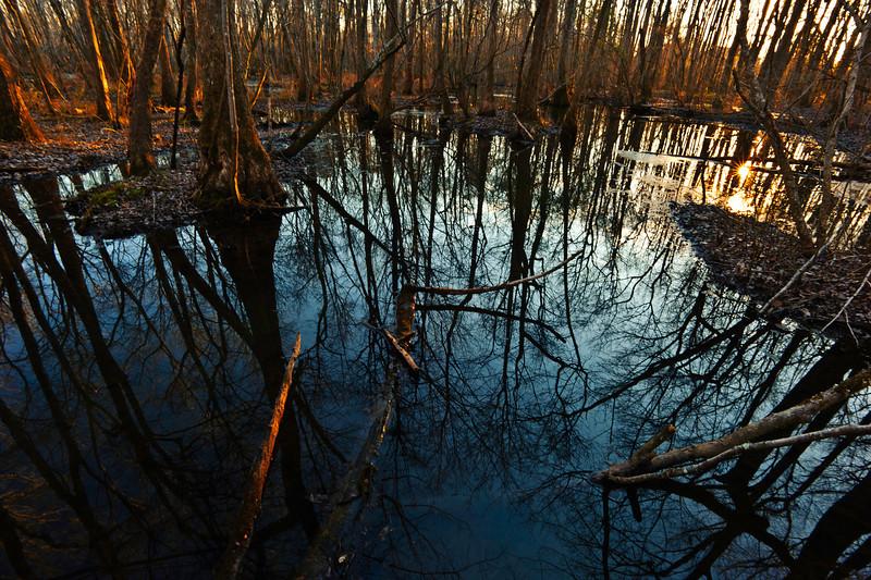 Ebenezer Swamp, Shelby County, Alabama - sunset at the swamp February 2011
