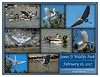 Great Egret - Cormorant 02-26-2017-1a web (50)