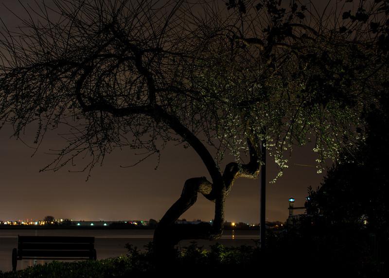 Night Blossums