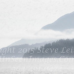 Trees in the Mist Outside Victoria B C  - Copyright 2017 Steve Leimberg - UnSeenImages Com _Z2A9874