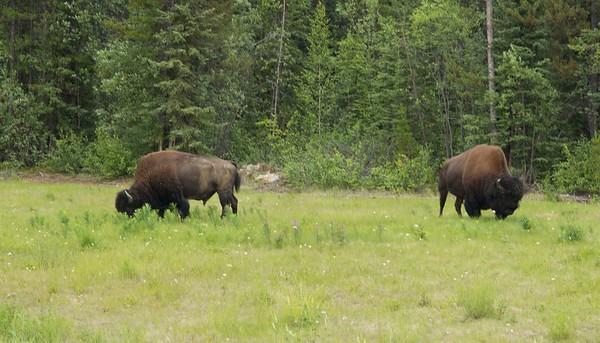 Alaska '17:  Week 6