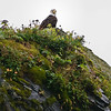 Bald Eagle on Sea Stack south of Seward