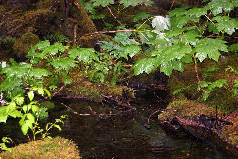 Photo By Robert Bodnar.......Alaska Rain Forest, Juneau Alaska