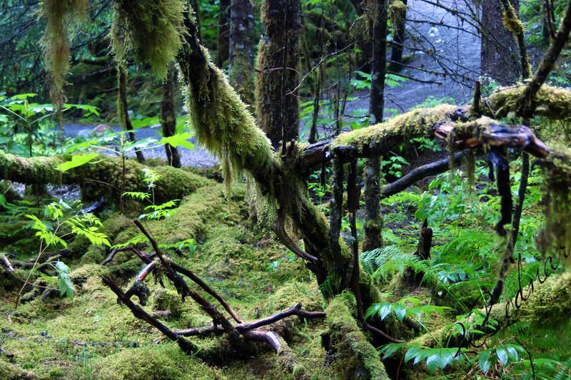Photo By Robert Bodnar.........Alaska Rain Forest, Juneau Alaska