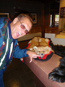 Mt. McKinley Lodge: display of pelts with Dennis
