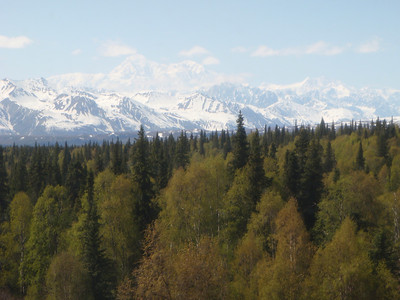 Train to Talkeetna scenic view: Mt. McKinley in distance
