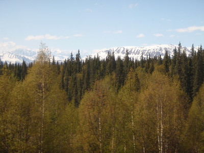 Train to Talkeetna scenic view: Mt. McKinley in distance to left