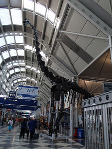 Chicago airport: dinosaur skeleton