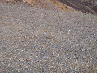 Activity: TWT ground squirrel