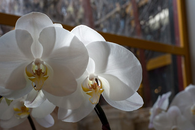 Orchids in the public market.