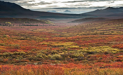 _RQ45387 Denali National Park, Alaska
