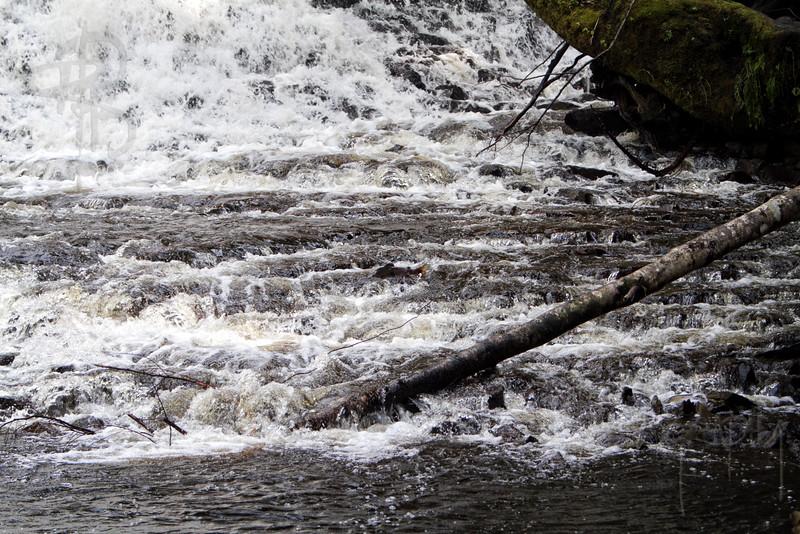 Salmon Jumping, IMG_4193