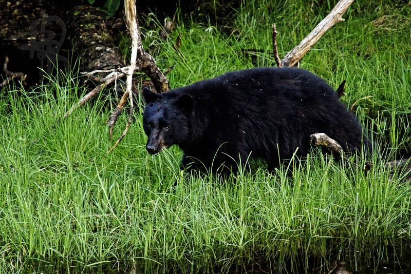 Bear, IMG_1445
