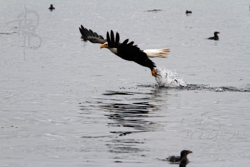 Eagle, IMG_5140