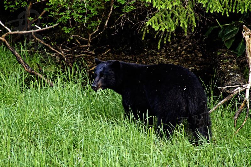 Bear, IMG_1447
