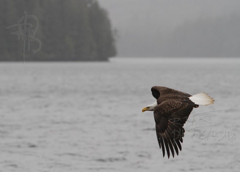 Eagle, IMG_0169