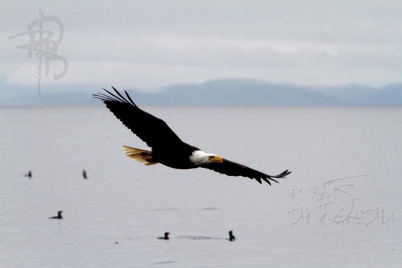 Eagle, IMG_5078