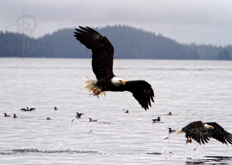 Eagle, IMG_4888
