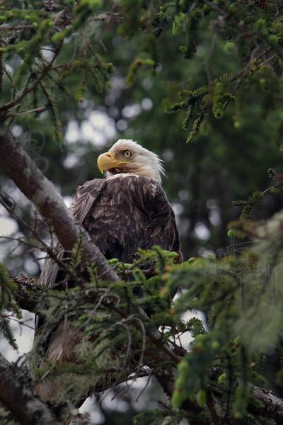 Eagle, IMG_0079