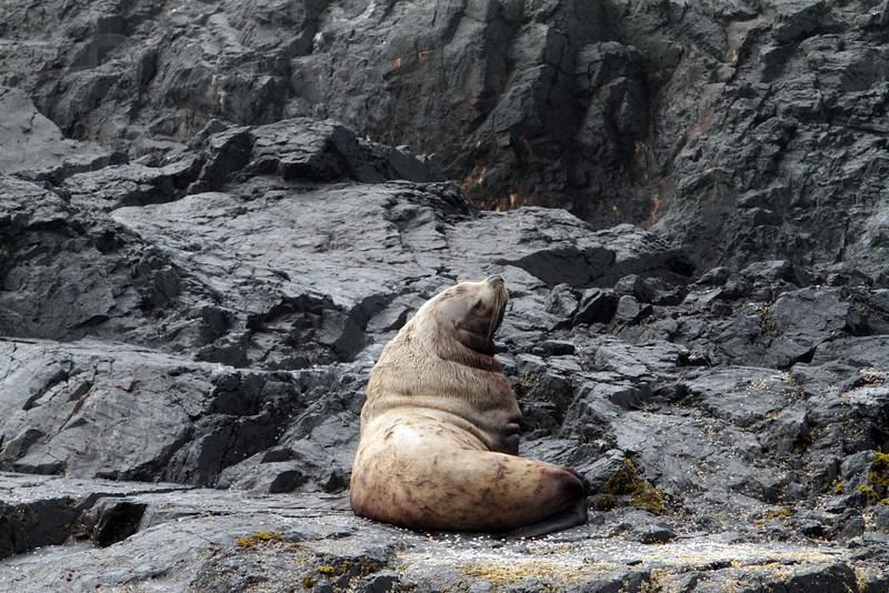 Sea Lion, IMG_7974