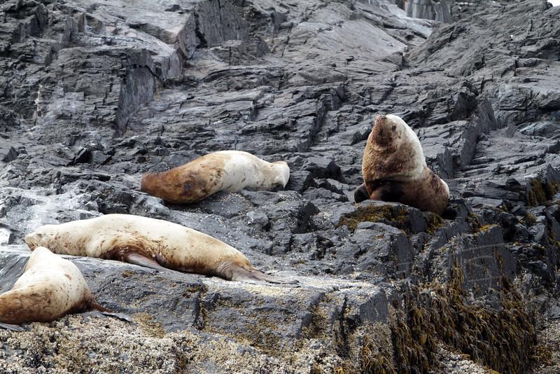 Sea Lions, IMG_1090