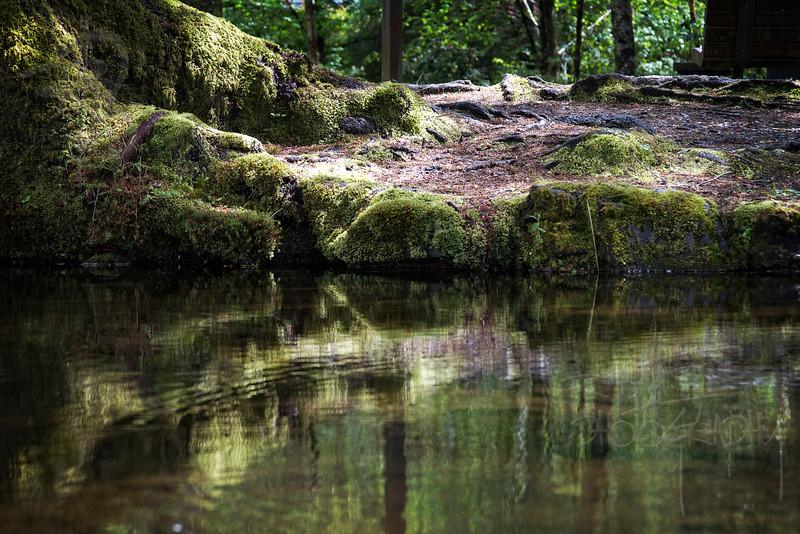 Moss (IMG_1307)