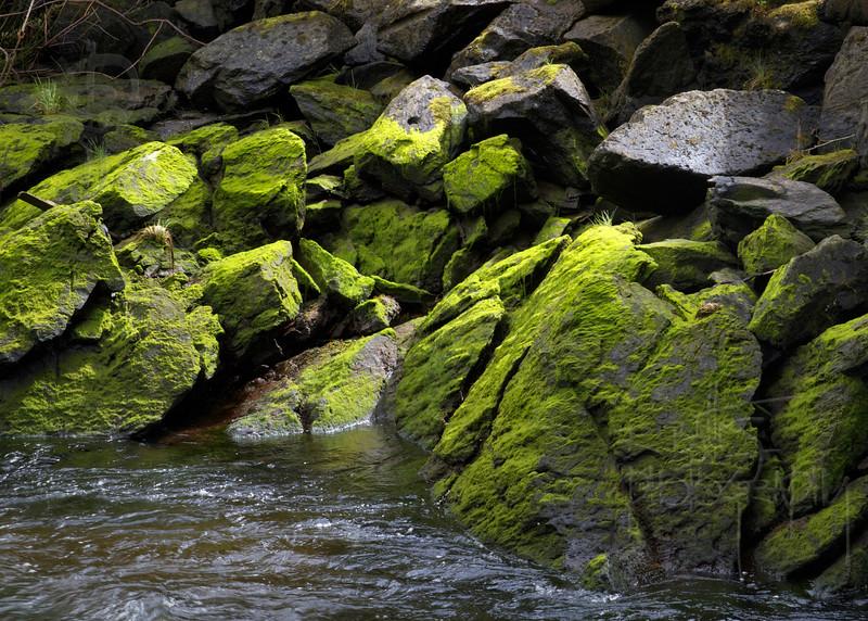 Moss Rocks (IMG_1364)