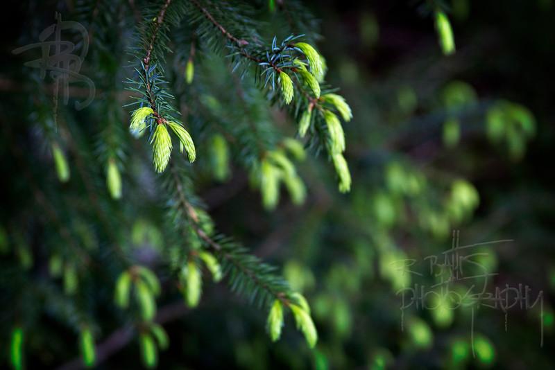 Green (IMG_1413)