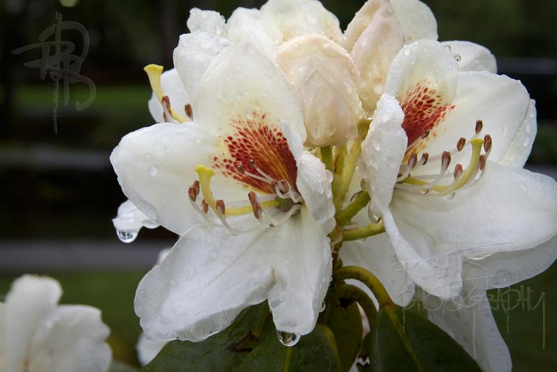 Flower (IMG_1295)