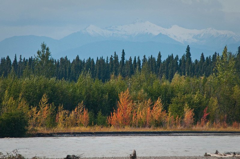 Changing foliage along the Tanana River, south of Fairbanks.