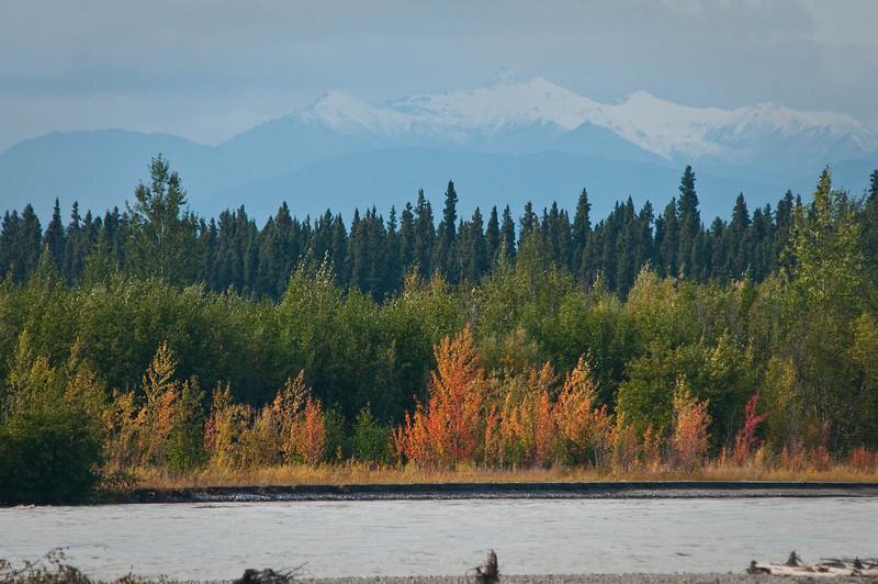 Changing foliage along the Tanana River, south of Fairbanks.