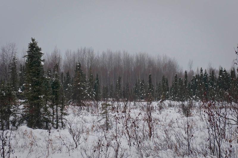 Early December Morning - Baxter Bog 2013