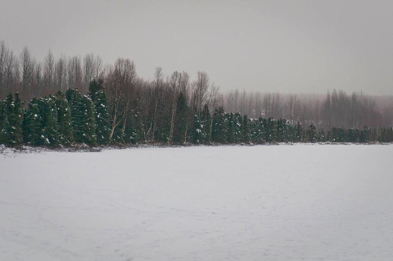 Morning Fog - Baxter Bog December 2013