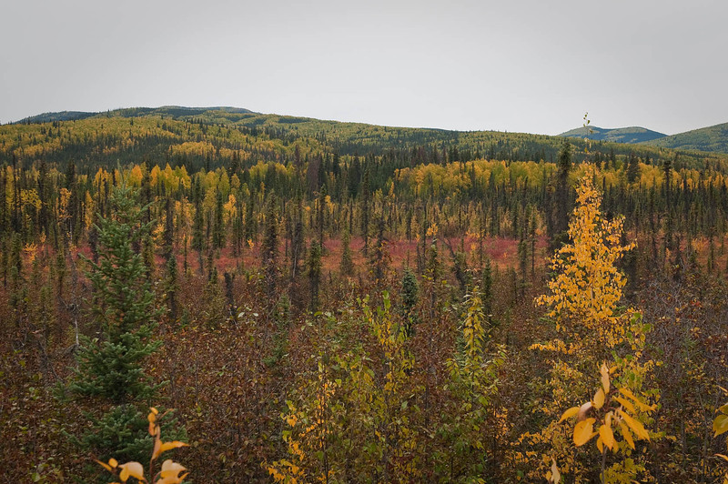 Changing colors on the tundra.  Winter is just around the corner.