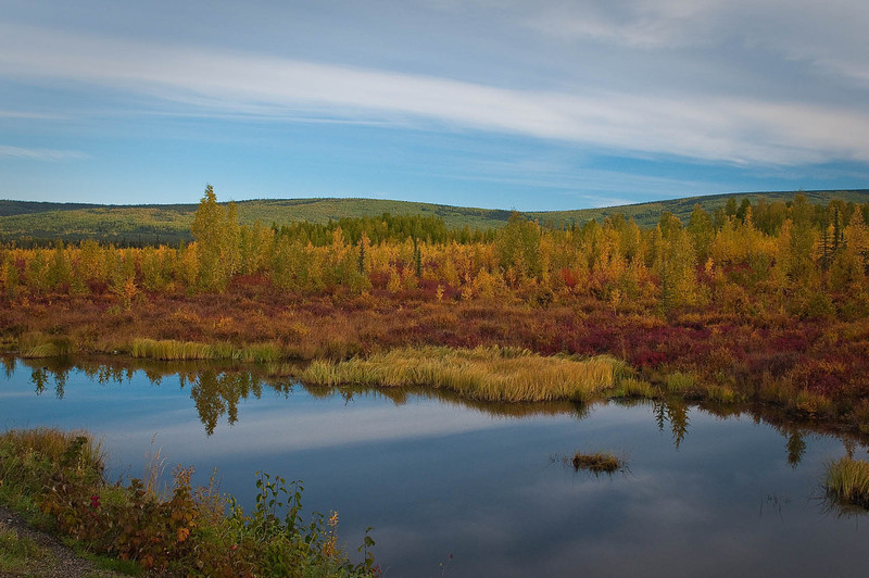 Interior Alaska tundra with its brilliant, albeit brief display of fall colors.