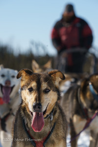 Alaska Outtakes--Sled dog 1.