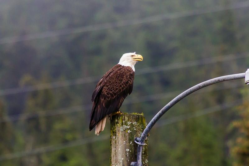 IMAGE: https://photos.smugmug.com/Alaska-2014/i-2qQQbd4/0/L/IMG_5154-L.jpg