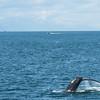 Alaska  July 23 2014  031
