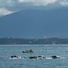 Alaska  July 23 2014  037
