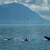 Alaska  July 23 2014  041