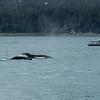 Alaska  July 23 2014  034